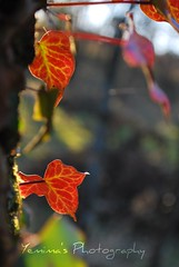 colors in nature (*yemima*) Tags: leaves bokeh visualart abigfave brillianteyejewel goldstaraward sadbokehfriday