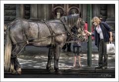 Nice Horse! (gahenty) Tags: street city horse photography raw streetphotography australia melbourne cbd hdr 1xp