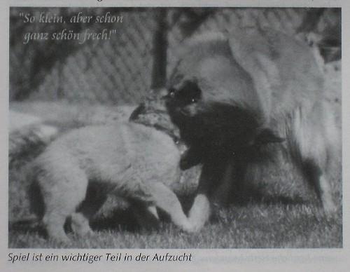_jpg-Kira-und-Gipsy