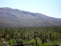 Saguaro Nation Park