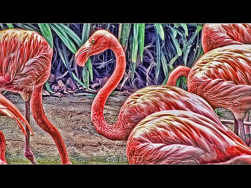 Flamingos - Topaz Adjust