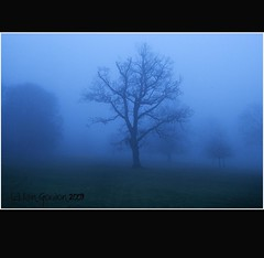 The Macabre Tree - Shrouded in Mist - Dundee - Tayside (Magdalen Green Photography) Tags: tree scotland cool dundee scottish tayside haar camperdownpark mistytree dsc4340 shroudedinmist creepyforest iaingordon picturesofdundee themacabretree dundeephotography imagesofdundee dundeestockphotography printsofdundee