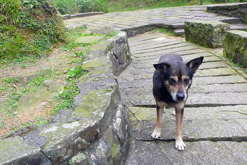 our little buddy on the cao ling historic trail