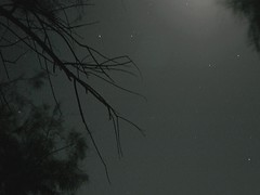 And The Earth Continues to Rotate (nathanielperales) Tags: camping trees moon tree night stars timelapse time earth deathvalley canon5d campground lapse rotate deathvalleynationalpark