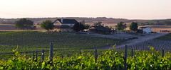 Vineyard (ANiceCupofTea) Tags: california sunlight house vineyard hills grapes pasorobles grapevines