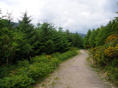 Nature walk in Lackandarragh