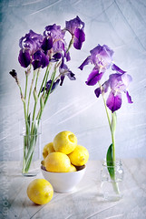 (hd connelly) Tags: iris stilllife food flower hdconnelly lemons