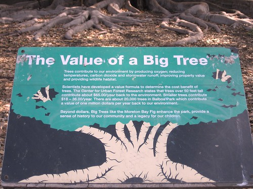 Environmental - The value of big tree
