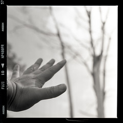 reaching out (S.H.CHOW) Tags: blackandwhite bw 6x6 mediumformat square kodak iso400 hc110 120film hasselblad neopan f28 planar 80mm 500cm fujineopan400 selfdeveloped homedeveloped filmography 10mins np400pr bathroomdevelopment 285c dilutionfg dilution1100 kodakhc1101100 shchowphotography 20090518500cmfnp400009web800