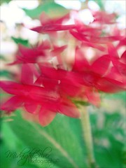 Its not life that passes you by.. its You who pass by life... (Mariam A. {midnight.silver}) Tags: pink light red blur flower green star bokeh motionblur starshapedflower