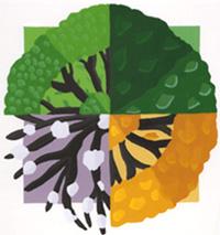 seasons-tree