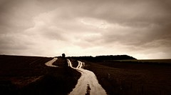 R e v e l a t i o n (Steven Eric Parker) Tags: yorkshire wolds flickrwalk yorkshirewolds ididntknowcowscouldbesobloodyscary bullsiknewabout apocalypsefriday