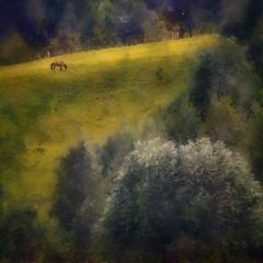Malvik in June (DAP version) (Krogen) Tags: horse nature norway landscape norge natur norwegen olympus c7070 noruega hest dap krogen landskap noorwegen noreg trøndelag malvik buaasen