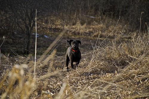 Hunter...