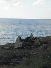 Scogliera (Stefano Sasso) Tags: sea sky italy beach nature water boat elba italia sail sailingboat