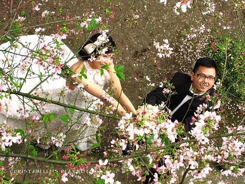 天元宮櫻花39