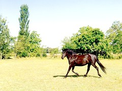 Crystal, was my Black Quarter Horse Mare, a Real Black Beauty (Pixel Packing Mama) Tags: loh exclamationpoints oldfamilyphotosset horsesset pixelpackingmama dorothydelinaporter worldsfavorite cbat exclamationpointspool pixwithexclamationpointsincommentsset cameraactionornotastilllifepool thebrownsvilleoregonyearsset anythinghorsespool blackanimalspool canonpowershota720isiistart112508set canonallcanoniistart112508set thecorvallisoregonyearsiistarting112508set favoritedpixvoliistartingjanuary12009set uploadedfirsthalfof2009 horsesontheloosepost1award1pool thecorvallisoregonyearspart7set horsesandthepeoplewholovethempool oversixmillionaggregateviews over430000photostreamviews