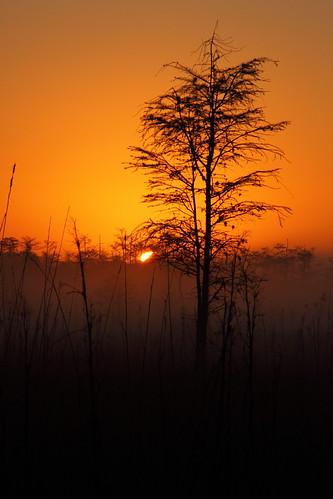 Fakahatchee Sunrise