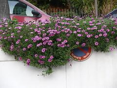 interdir de stationner ou offrir des fleures