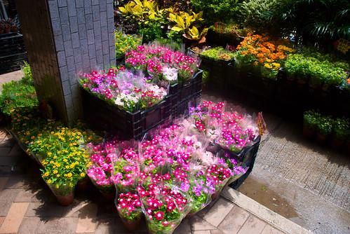 Flower Market 02