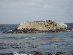 """Sea lion island • <a style=""""font-size:0.8em;"""" href=""""http://www.flickr.com/photos/36178200@N05/3395421266/"""" target=""""_blank"""">View on Flickr</a>"""