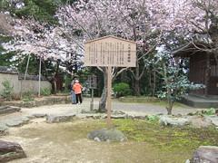 二代目鐘楼跡と安珍桜