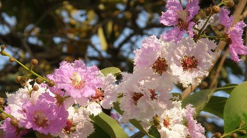 58.路邊偶遇盛開的花 (2)