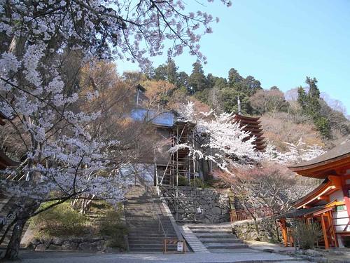 09-04-10【桜】@談山神社-08