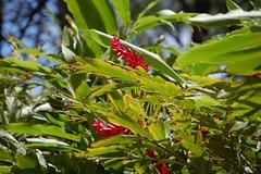 (sharra2) Tags: beach hawaii waikikibeach hiltonhawaiianvillage