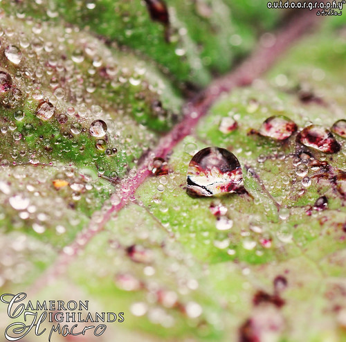 Outdoorgraphy™ : Drops of Jupiter II