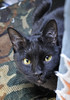 たんこやの黒猫