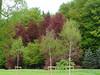 gli alberi di arboretum