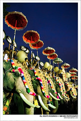 Thrissur Pooram 2009 (Smevin Paul - Thrisookaran !! www.smevin.com) Tags: people music india elephant festival umbrella paul temple photography all indian south kerala firework sri series procession krishna enjoying 2009 maidan panchavadyam thrissur trichur melam tusker pooram koda chenda vilakku peepe medam vadakkunnathan ambalam smevin smevinpaul poram paramekkavu d40x trisoor thekkinkadu smevins wwwsmevincom poorams