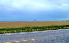 sk08i13 Hwy 2, Saskatchewan, Flat Prairie 2008 (CanadaGood) Tags: morning blue canada color colour green yellow dawn highway pavement farm sk prairie saskatchewan agriculture 2008 moosejaw 2000s canadagood