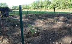 Garden half planted