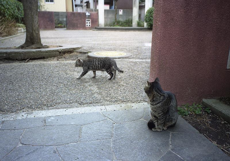 通過する猫
