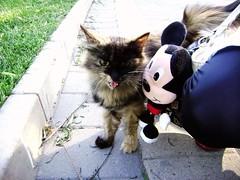 (sweatershiho) Tags: feline creature utopia animalia felidae