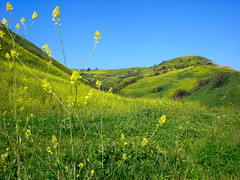 Carbon Canyon (Hayden Yates) Tags: flowers blue sky green field digital landscape fire photography vista scorched