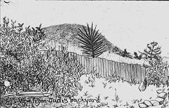 view from judi's backyard (socaloca) Tags: pencil sketch backyard sandiego hill southerncalifornia callejuanito