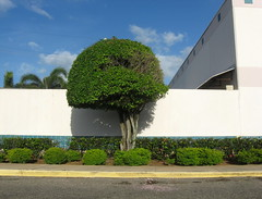 urban flora (Minno Ramirez) Tags: street city urban plant color tree green colors architecture landscape island calle flora colorful paint downtown colours puertorico structures vivid sunny structure arecibo elements urbana caribbean mundane emptiness urbanlandscapes urbanscape urbanlandscape caribe borinquen contemporarylandscape peopleless neotopografia newtopographics contemporarylandscapes nuevatopografia puertoriconewtopographicsarecibo
