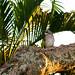 Bali Travel054.jpg