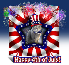 Celebrating Kitty Independence!