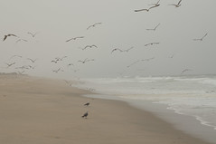 Birds at the beach (Neponset, California, United States) Photo
