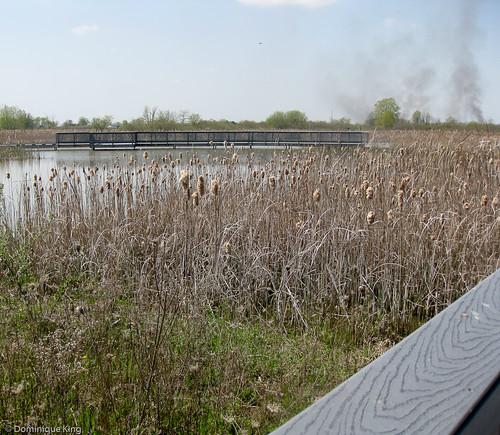 Ottawa National Wildlife Refuge, Ohio-6