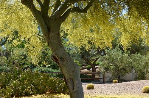 Arizona 2011 079