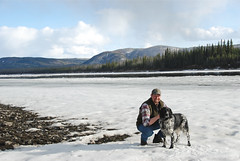 On the Stewart River (Wild Rose Dogs) Tags: yukon stewartriver