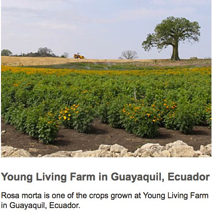 5838960329 6a5026d41d Agriculture in Ecuador and Smalltown USA or Not