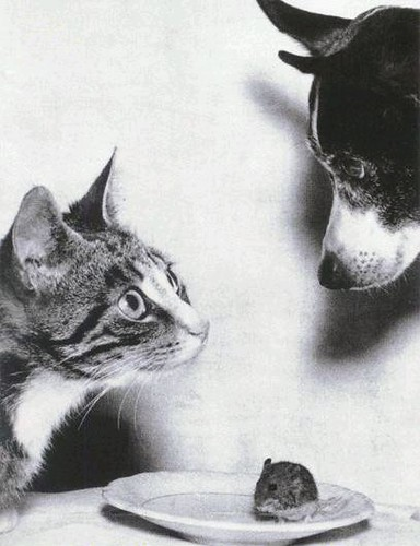猫狗老鼠/经典摄影作品/Photo