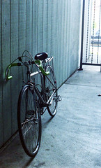 another picture of my bike (pseudosara21) Tags: bicycle minoltasrt101