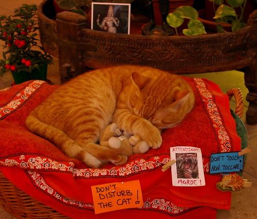 Venice 08.2007 Beware, The Cat!